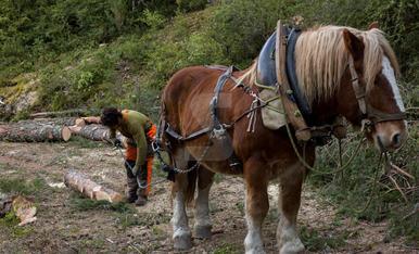 Traginers del Pallars