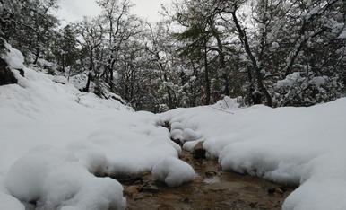 Passejant pels camins de les muntanyes d'Oliana es podien trobar aquests postals nadalenques, un 25 de març, en plena primavera.