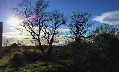 Siluetes d'arbres a contrallum