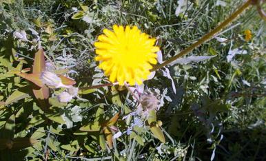A la flor de la vida.