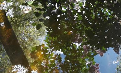 El lila reflectit a l'aigua,Magda Bach.