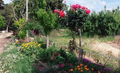 Flors a Vallcalent.