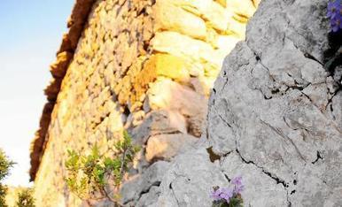 .:  Fins i tot a les roques del Montsec (ermita de La Pertusa a Corçà) arriba la primavera en la seva lliçó permanent de natura i vida.