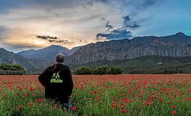 Posta de sol a Oliana, amb vistes a la muntanya de la creu i la serra d'Aubenç , des d'un camp ple de roelles.