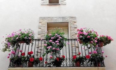 Balcó florit a Montoliu de Lleida.