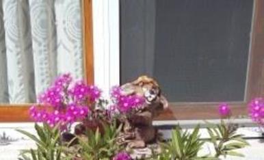 La tenalla de casa, florida.