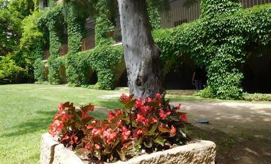 L'explosió de la vegetació primaveral cobreix les parets d'una part del Monestir de Mont Sant Benet a Sant Fruitós del Bages.
