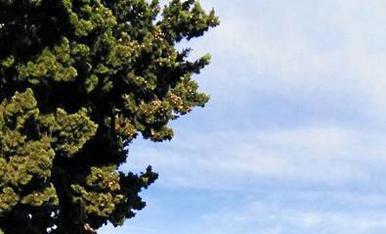 Arbres i natura verda