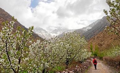 Primavera a l'Atlas (Marroc)
