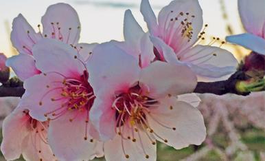 La flor il·luminada.