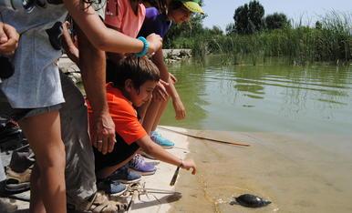 © Més tortugues per a l'estany d'Ivars
