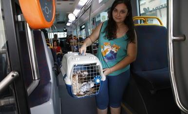 © Les mascotes ja poden pujar a l'autobús