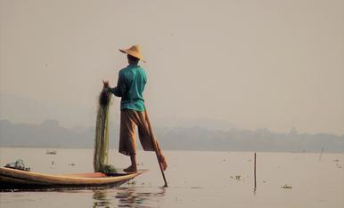 Els inthas, pescadors del llac Inle a Myanmar, enrotllen el rem a la cama i així tenen les mans lliures per col·locar les xarxes al fons del llac. Tot un espectacle d'equilibrisme.