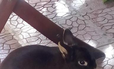 Rachet nuestro conejo enano