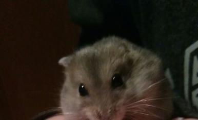 El meu hamster escapista que se que en el fons m'estima