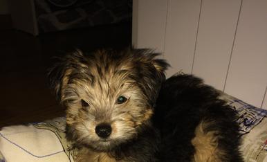 Os presento a Bobby un cachorrito muy jugueton,simpstico y muy sociable ☺️