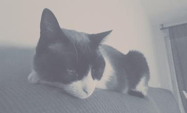 El Maulet, el nostre gat de 5 anys, adoptat de Progat Lleida, el rei de les migdiades al sofà.