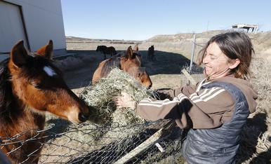 © Solidaritat amb els cavalls de Torres