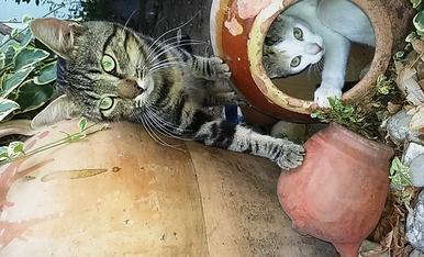 El Mino y la Blanqueta, los gatetes del patio