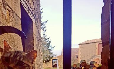 Miran per la finestra.Les mascotes de la meva parella.Magda Bach