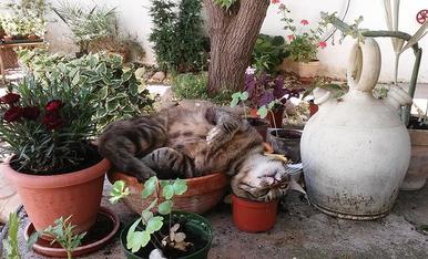 El Mino este verano se hacía pasar por una planta. Cada día se plantaba en una maceta.
