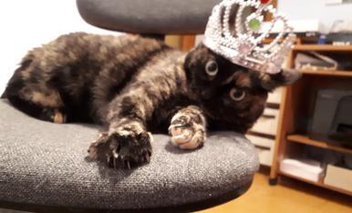Aquesta princesa es diu cuqui i es part de la familia desde que tenia 5 mesos. Com podeu veure a la foto amb la corona es la reina de la casa, es molt presumida i li agrade molt que li fagin fotos.