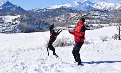 Felicitat en estat pur! La Bulma ha descobert la neu!