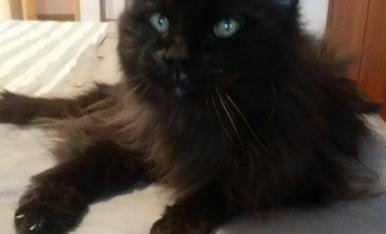 Sóc el Misseries II,  tinc 20 anys ... i sóc un gat molt mimat.