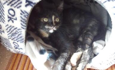 es una gata petita de com a molt 4 mesos que sa mare la va abandonar al jardí i nosaltres la vam salvar i li vam posar de nom Lluna.