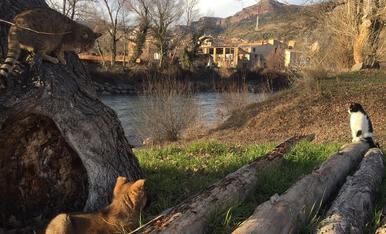 A la vora del Riu Noguera Pallaresa surten a passejar les nostres mascotes. A més ja volen aprendre l'ofici de Raiers.