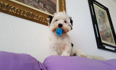 La meva mascota