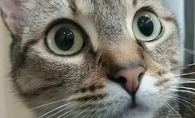 Aquesta es la nostra gateta Lily amb la careta de bona que fa i esta feta un bitxo!!!