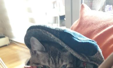 Al Meló li encanta llegir