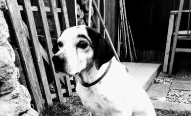 Aquest es el meu gos Lucky. Els vaig recollir del carrer un dia d'hivern i porta amb mi 14 anys.