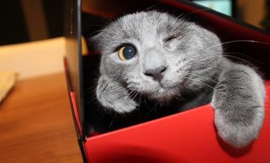 El Kakashi és un gat pirata. Adorable i tovet, donen ganes d'abraçar-lo tots els dies... encara que ell no vulgui...