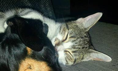 El Pinxo i la Xisca fent migdiada