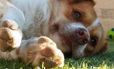 aquest es un dels cinc gossos que tinc. és diu Xin