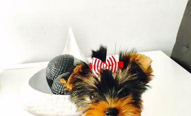 La meva mascota (2)