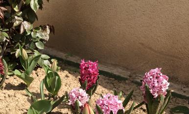Flors de primavera en el meu jardi
