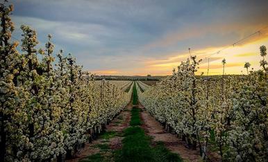 Camps de l'horta de Lleida un capvespre de primavera.