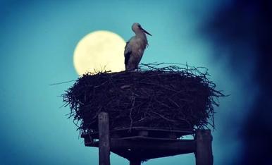 A la lluna plena