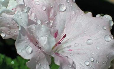 Que millor q una representacio de la primavera que la combinacio d'aigua amb flor.