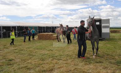 © 200 cavalls i 70 criadors avui a EquiMollerussa