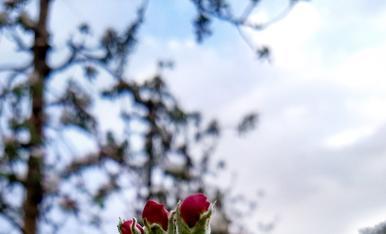 El teu temps, la primavera 2018