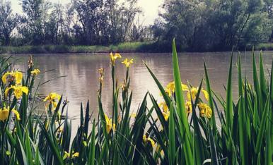 El canal va plenet.