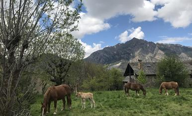 Primavera a Taüll