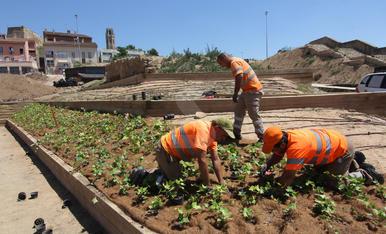 Instal·len plantes al Call Jueu de Lleida