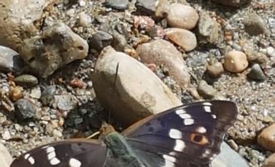 Papallona trobada al boltans del riu,Magda Bach.