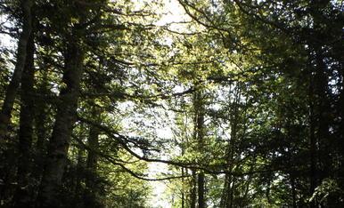 Temps d'estiu a 20ºC al Parc Nacional d'Ordesa i Monte Perdido