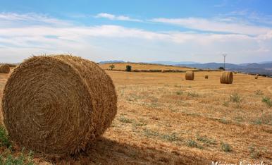 L'estiu es temps de blat.... així ho demostren aquestes bales de palla en un camp de Montgai, a La Noguera.